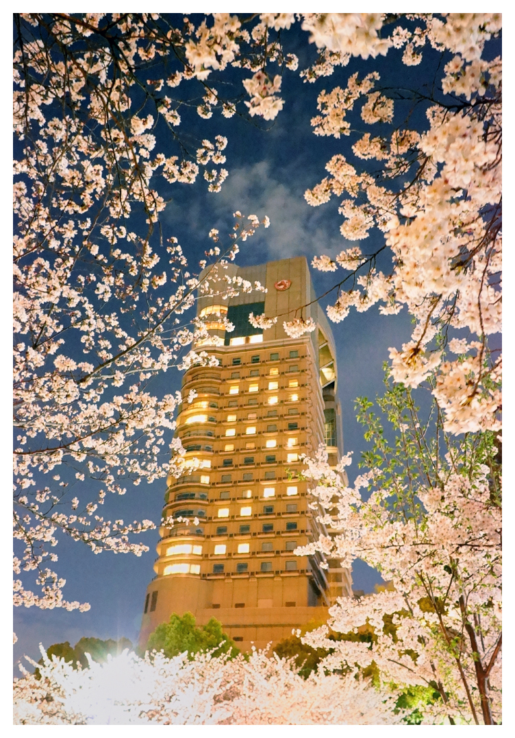 Cherry blossoms at Imperial Hotel Osaka